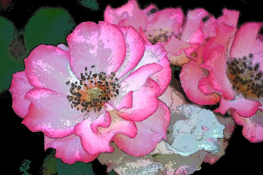 Floral Photograph - Rose 129 by Pamela Cooper