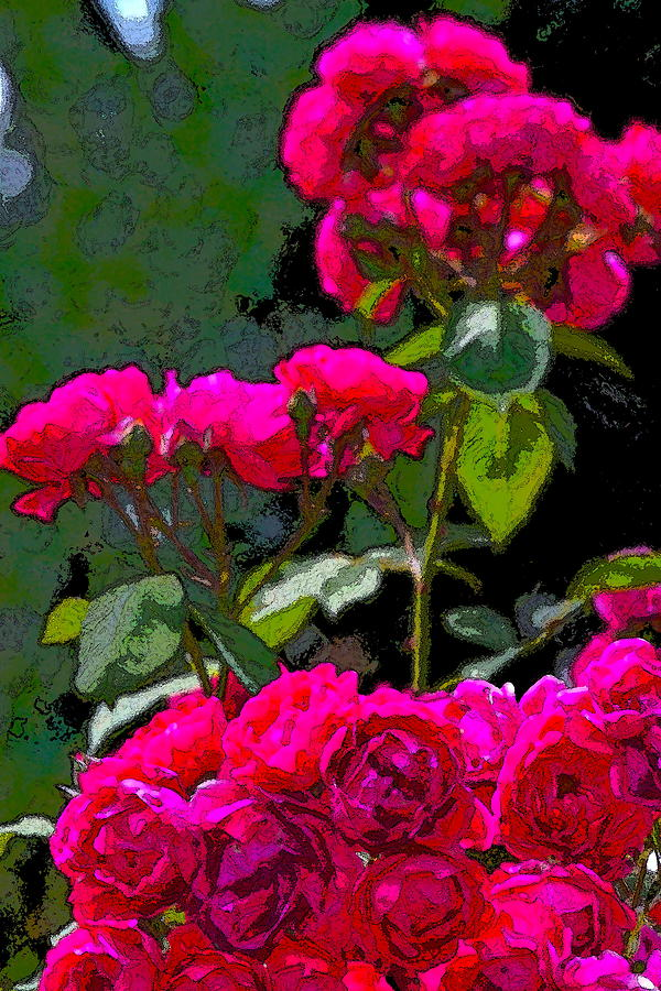 Floral Photograph - Rose 135 by Pamela Cooper