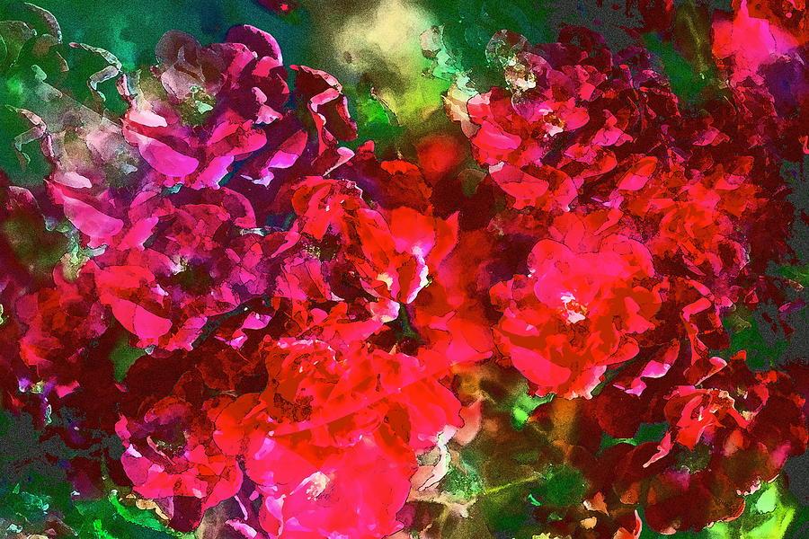 Floral Photograph - Rose 143 by Pamela Cooper