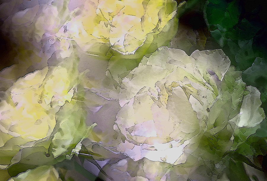 Floral Photograph - Rose 151 by Pamela Cooper