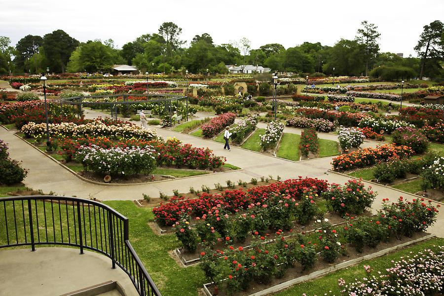 Rose Garden Park Tyler Texas Photograph By M K Miller