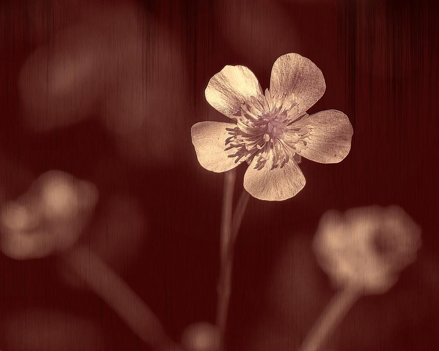 Red Photograph - Rose Grain Wildflower by Bill Tiepelman