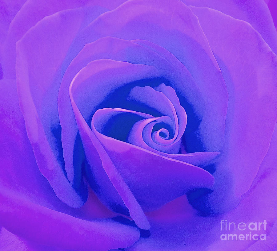 Rose Photograph - Rose Micro 4 by Cindy Lee Longhini