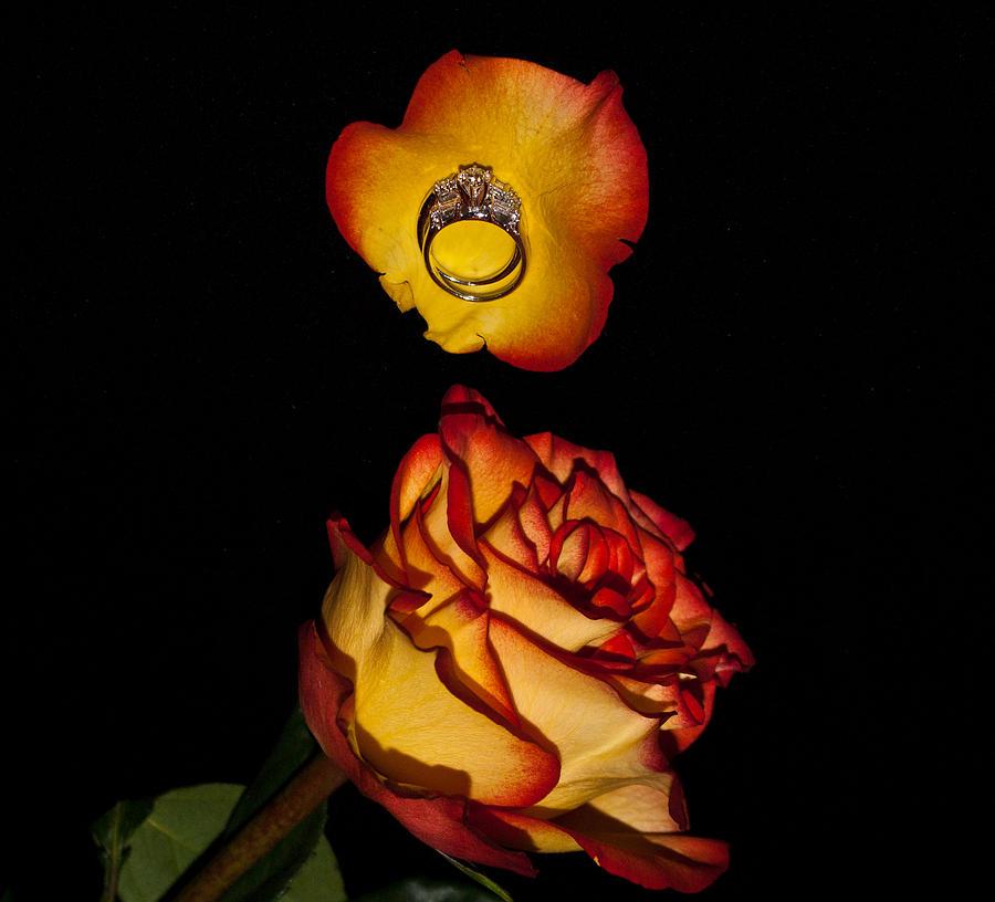 Romance Photograph - Rose Petals And Wedding Rings 1 by Douglas Barnett