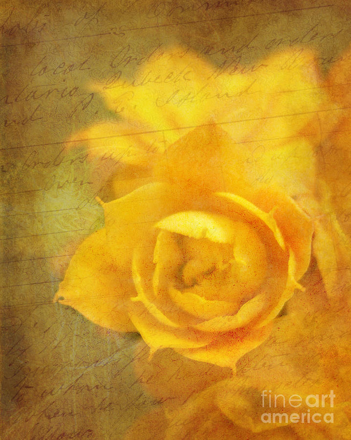 Yellow Photograph - Roses For Remembrance by Judi Bagwell