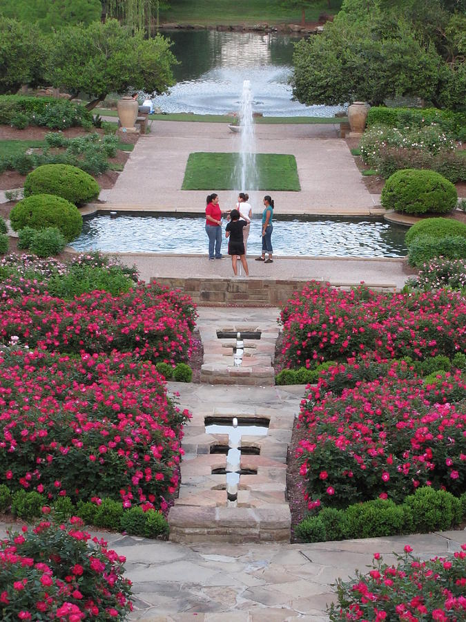 Roses In Bloom Fort Worth Botanical Gardens Photograph By Shawn Hughes