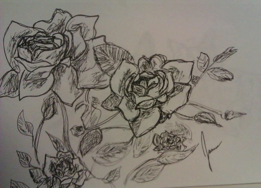 Roses Drawing by Jamie Mah