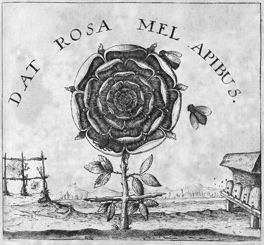 Rosicrucian Photograph - Rosicrucian Mystical Symbol by Middle Temple Library