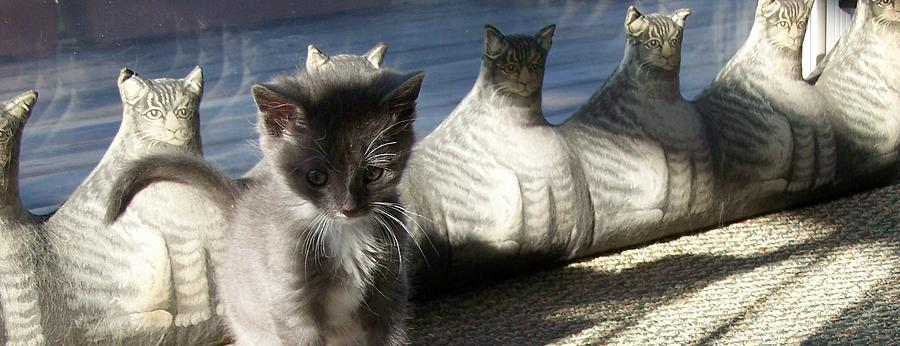 Kitten Photograph - Rosie And Friends by Barbara McGeachen
