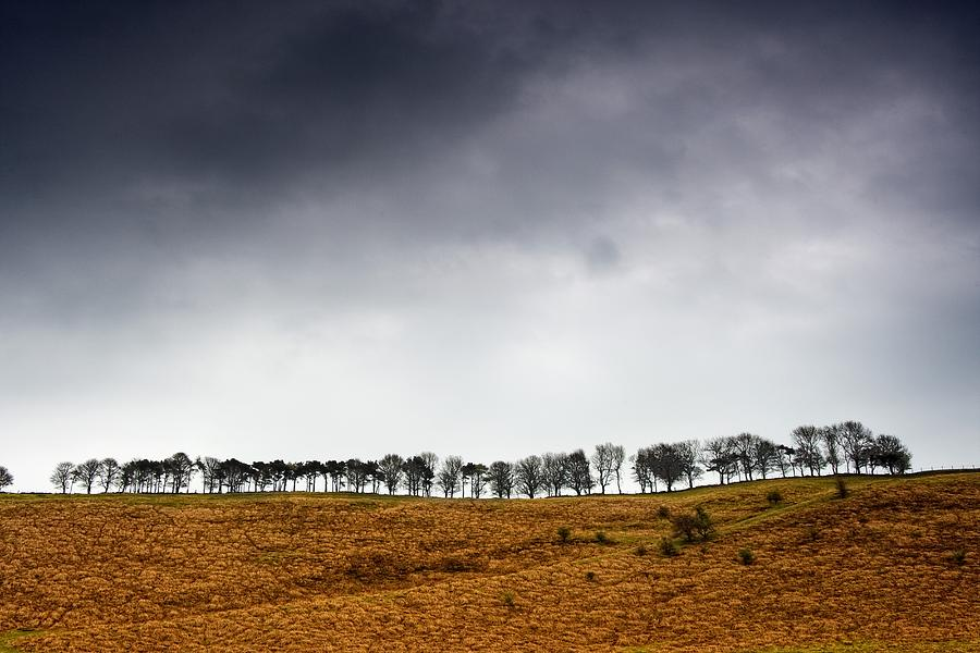 British Photograph - Row Of Trees In A Field, Yorkshire by John Short