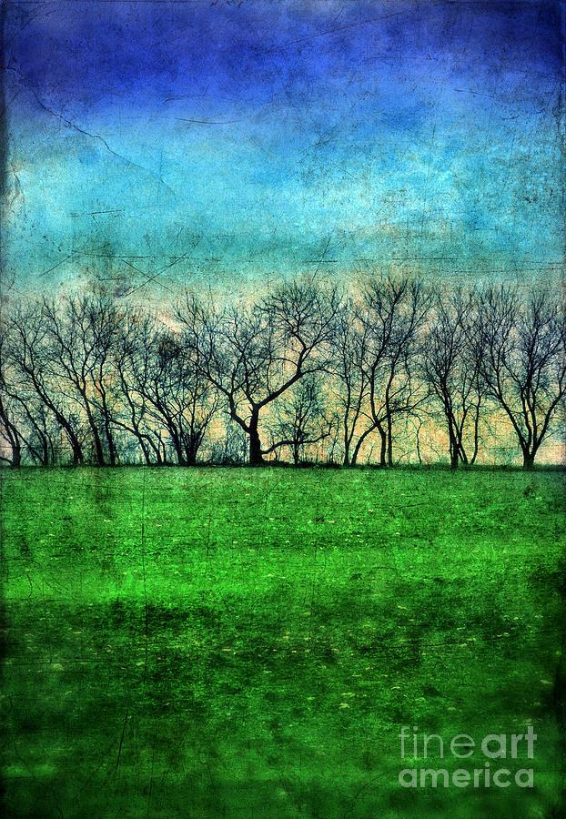 Trees Photograph - Row Of Trees by Jill Battaglia
