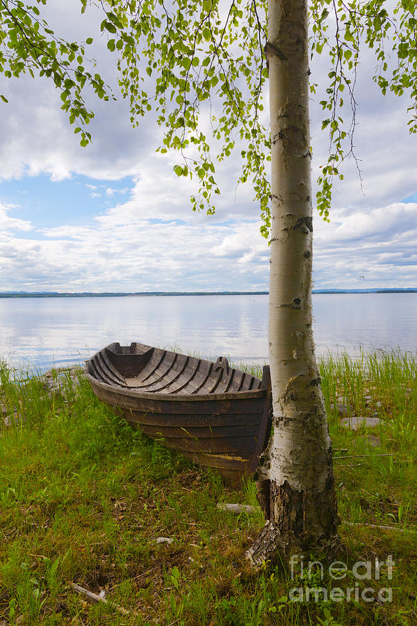 Rowing Boat And Birch Tree By A Lake Photograph by ...