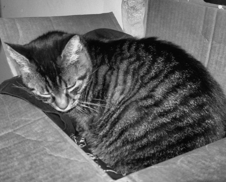 Cat Photograph - Rox In A Box by Juliana  Blessington