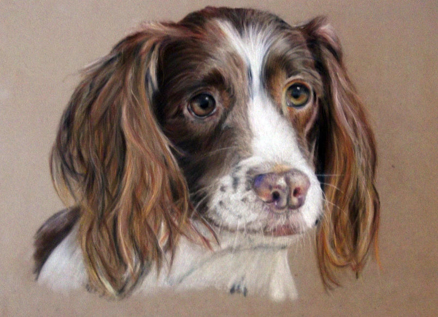 Dog Painting - Ruby by Tanya Patey