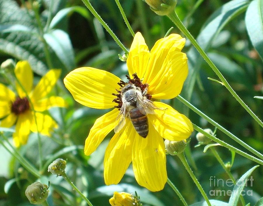 Bee Photograph - Rumble With A Bee by Tina McKay-Brown