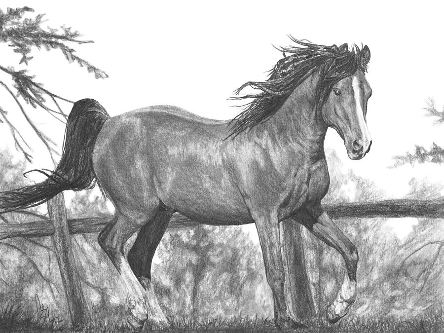 Running Horse Drawing by Bobby Shaw - photo#24