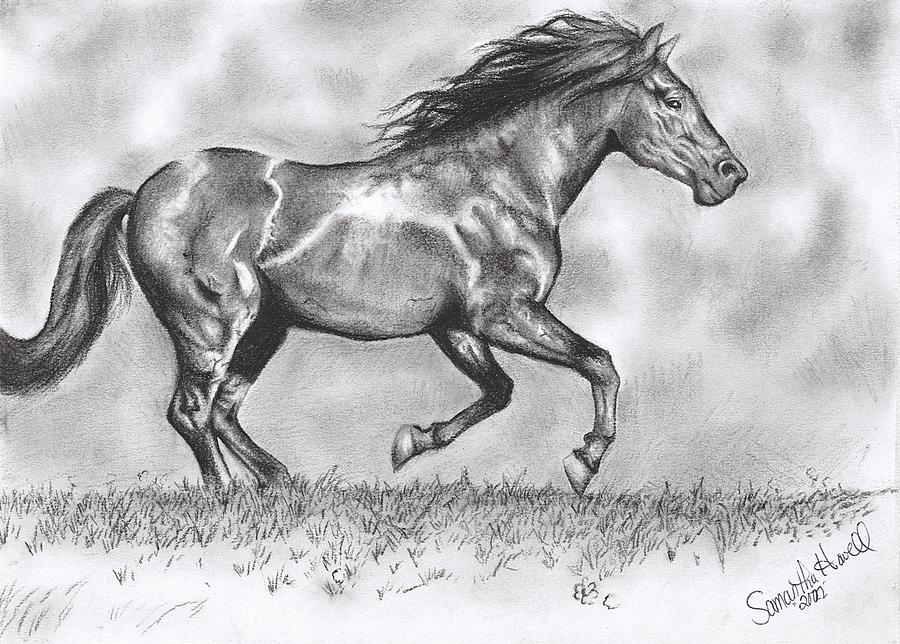 Horse Drawing - Running by Samantha Howell