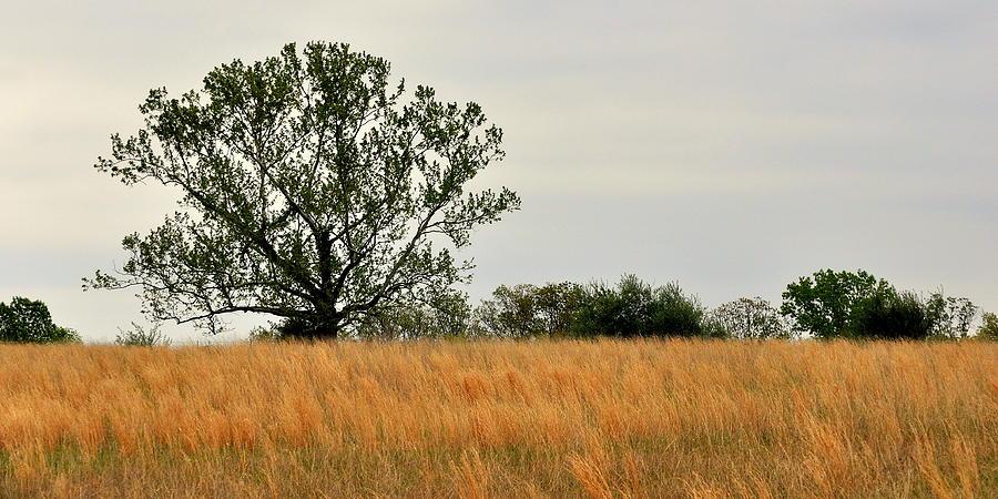 Landscape Photograph - Rural Landscape by Marty Koch
