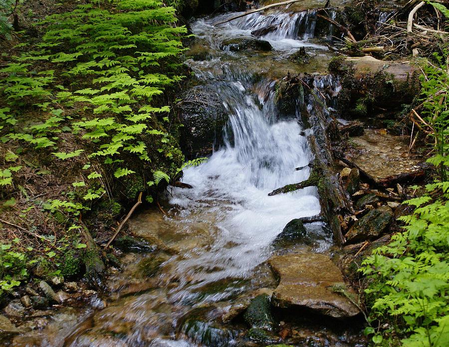 Nature Photograph - Rushing Water On Mt Spokane by Ben Upham III