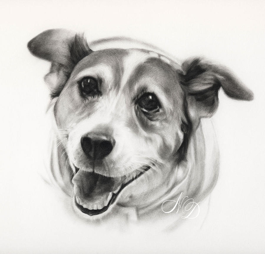 Dog Drawing - Russell Terrier  by Natasha Denger
