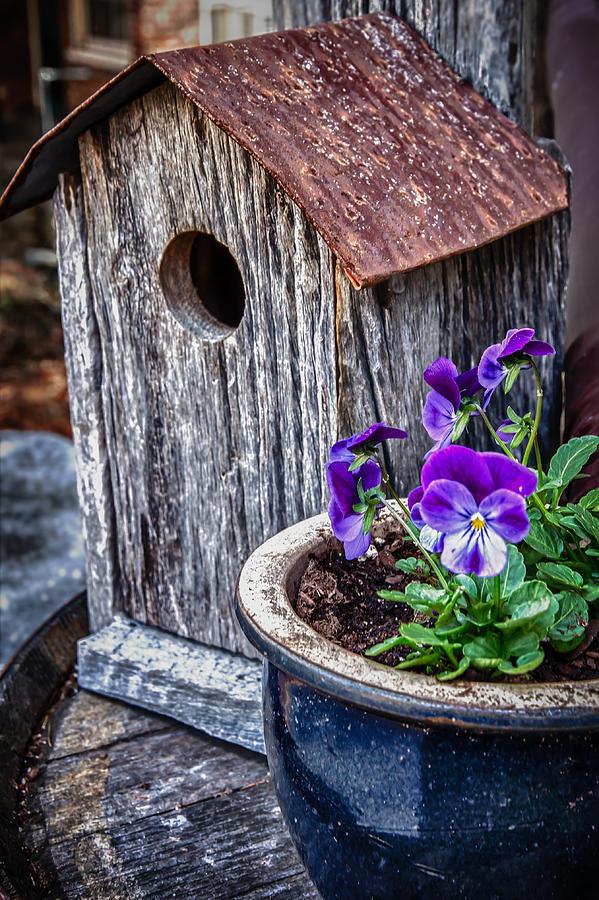 Rustic Bird House Photograph