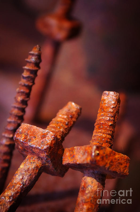 Bolt Photograph - Rusty Screws by Carlos Caetano