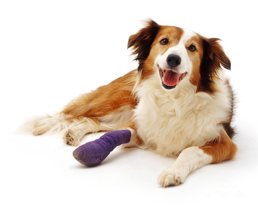 покажу вам картинки хромых собак административной ответственности продажу