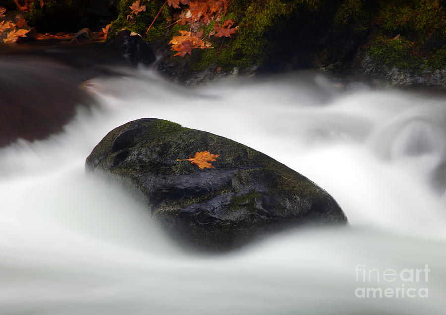 Cascade Photograph - Safe Haven by Mike  Dawson