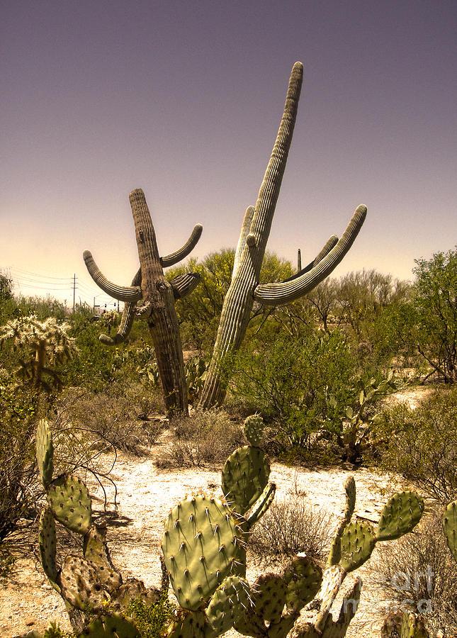 Saguaro Cactus Painting - Saguaro Cactus Dance by Gregory Dyer