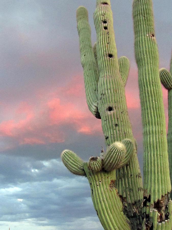 Saguaro Photograph - Saguaro In The Sky by Wendi Matson