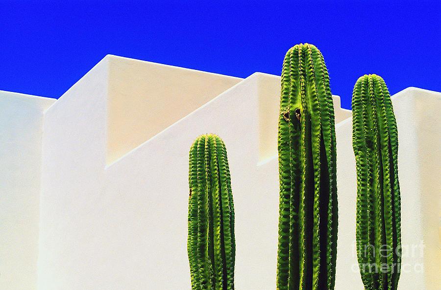 Cactus Photograph - Saguaros  by Gib Martinez