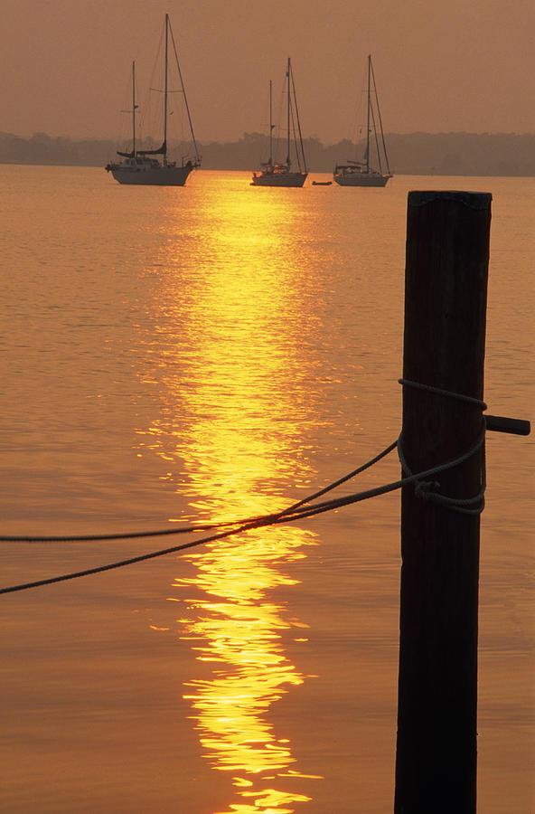 Outdoors Photograph - Sailboats At Sunset by Natural Selection Tony Sweet