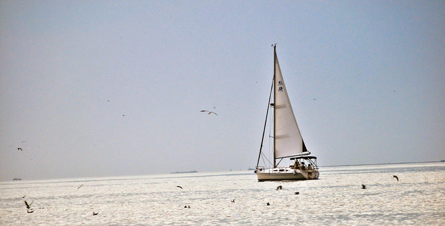 Sail Pyrography - Sailing by Anusha Hewage