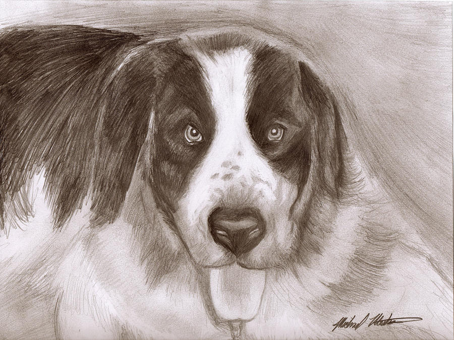 Bernard Drawing - Saint Bernard by Michael Mestas
