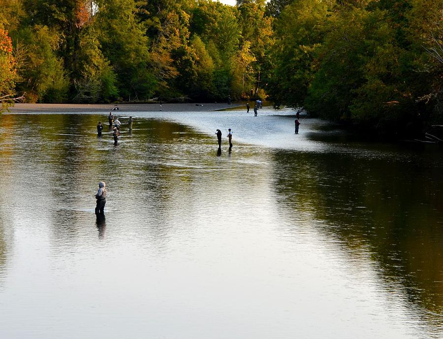 Salmon Photograph - Salmon Hunting Skok Style by Mark Bowmer
