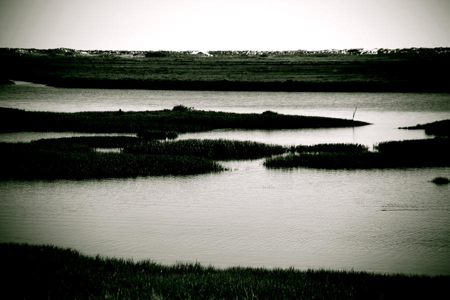 Photographer Photograph - Salt Marsh by Jez C Self
