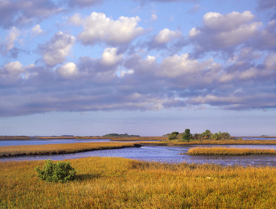 Cedar Key Photograph - Saltwater Marshes At Cedar Key Florida by Tim Fitzharris