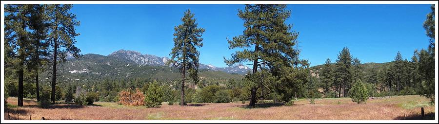 Forest Photograph - San Bernardino Forest Vista by Glenn McCarthy Art and Photography