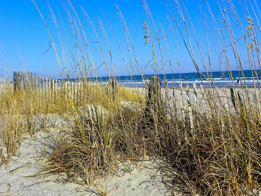 Sand Photograph - Sand Dunes by Eve Spring