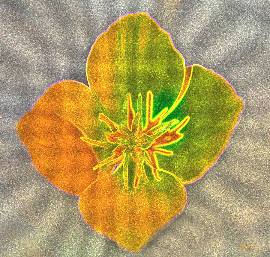 Flower Photograph - Sand Flower by Mitch Shindelbower