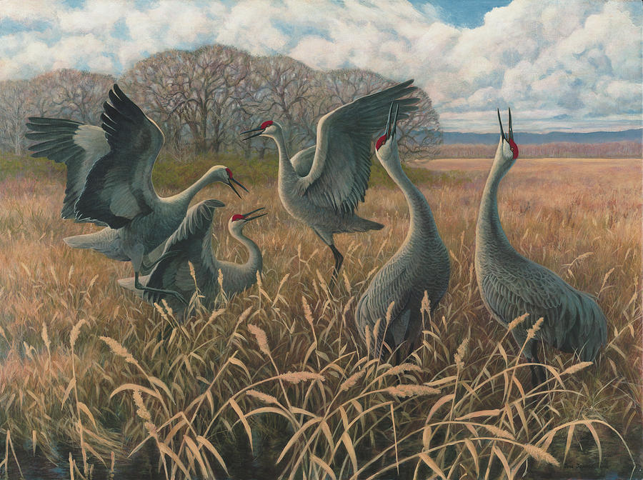 Nature Painting - Sandhill Cranes Dancing by Jon Janosik