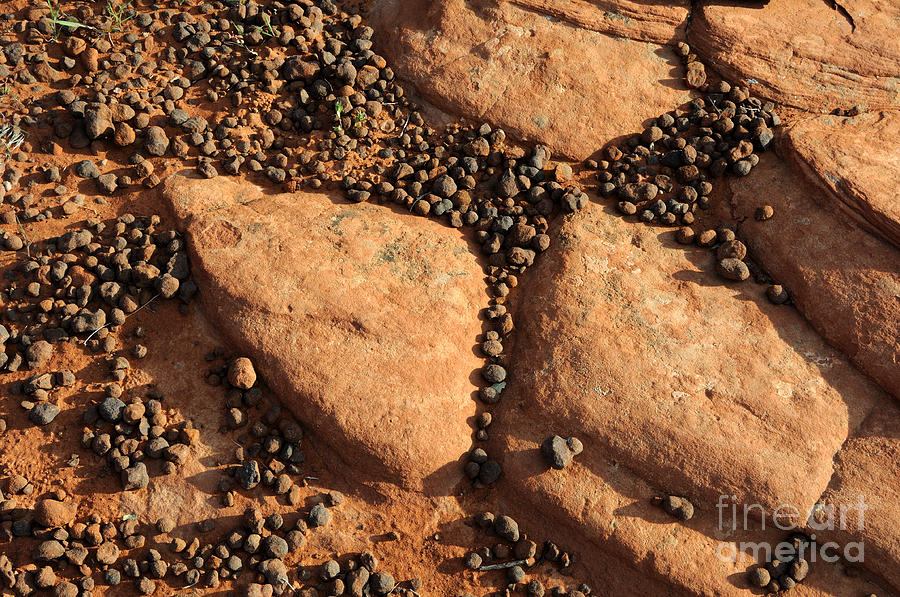 Rock Photograph - Sandstone And Pebbles by Gary Whitton