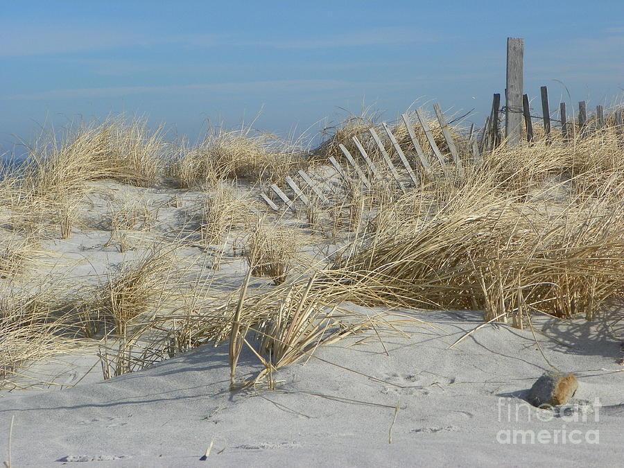 Sandy Neck Beach Photograph by John Doble