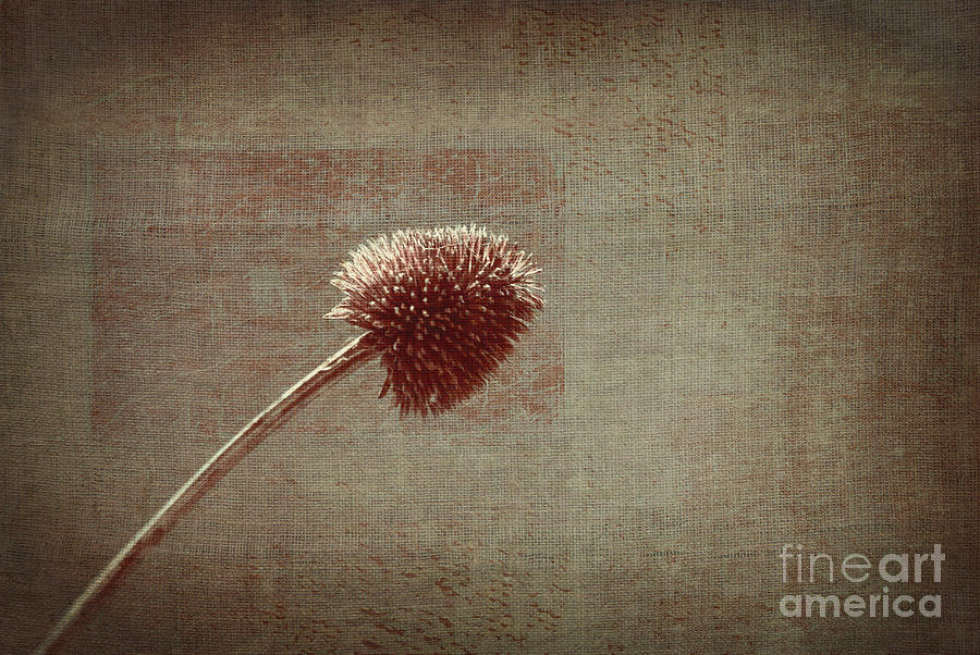 Plant Photograph - Sans Nom - S03p11t05 by Variance Collections