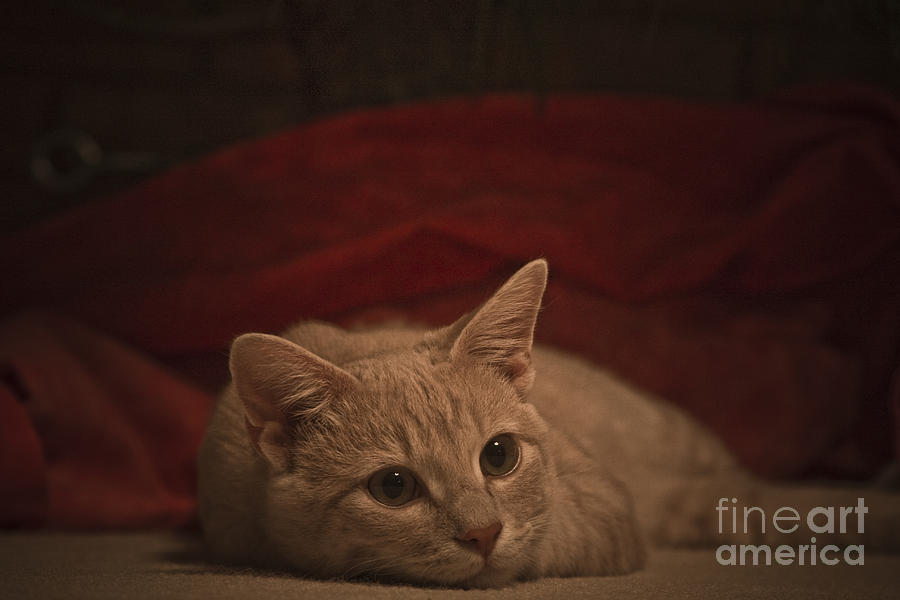 Cats Photograph - Santa Is Coming by Kim Henderson