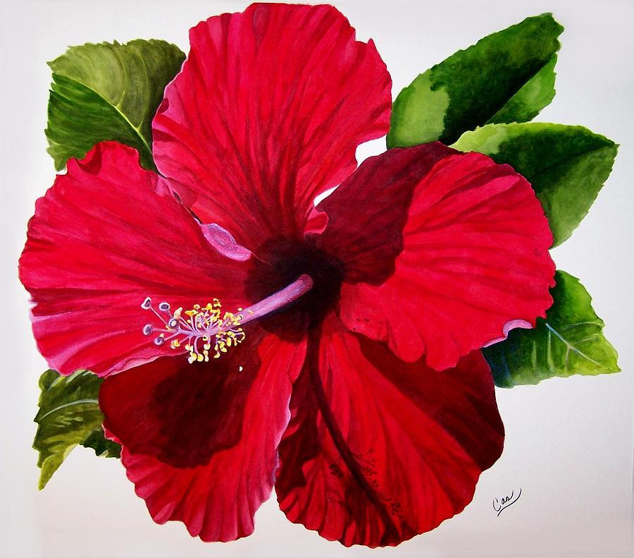 Hibiscus Painting - Saras Pashion by Karen Casciani