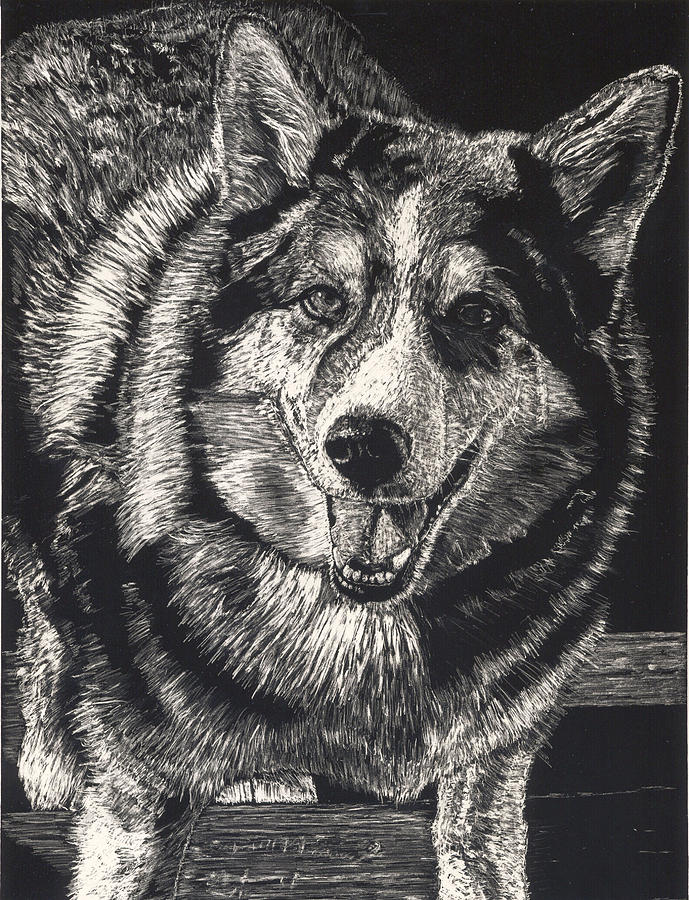 Dog Drawing - Sarge The Dog by Robert Goudreau