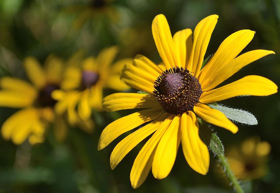 Brown Photograph - Sassy Yellow by Alan Seelye-James