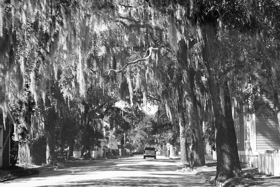 Branches Photograph - Savannah II by Magda Levin-Gutierrez