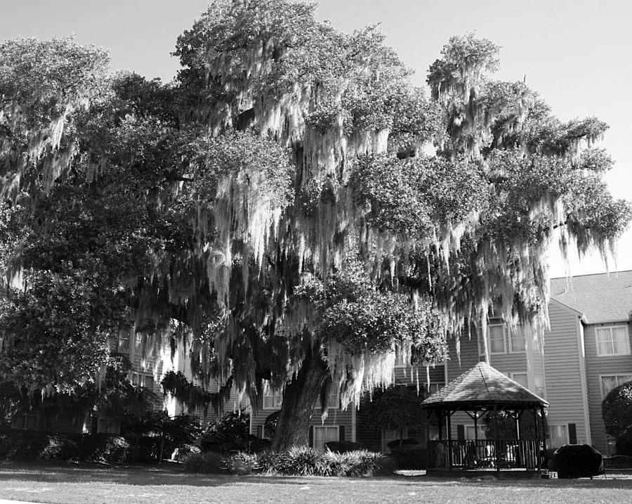 Tree Photograph - Savannah by Magda Levin-Gutierrez